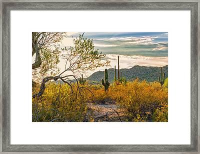 Arizona Sonoran Desert Framed Print