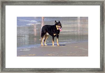 Australia - Dog On The Beach Framed Print by Jeffrey Shaw