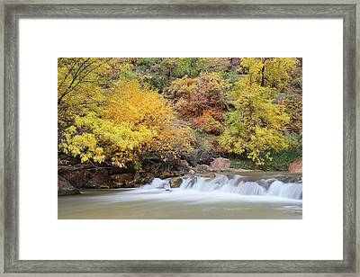 Autumn Foliage In Zion National Park Framed Print