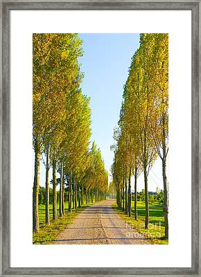 Autumn Path Framed Print by Svetlana Sewell