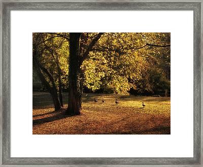 Autumn Promenade Framed Print by Jessica Jenney