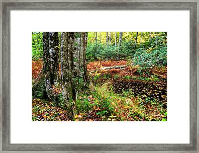 Autumn Upper Shavers Fork Preserve Framed Print by Thomas R Fletcher
