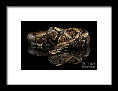 Reptiles Framed Prints