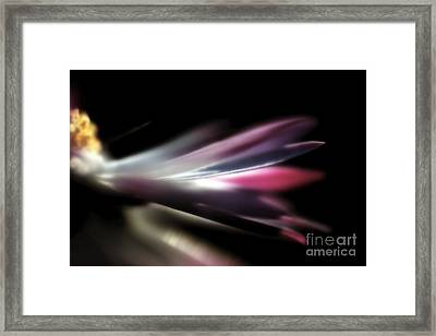Beautiful Colorful Image About Daisy Flower Framed Print by Odon Czintos