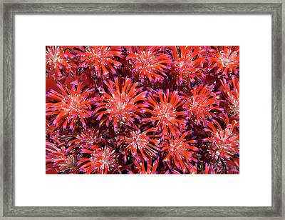 Bromeliad Framed Print by Edwin Verin