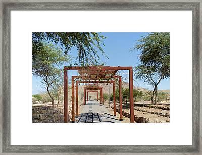 Cactus Garden At Museo Tumbas Reales De Sipan Framed Print