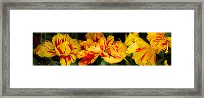 Close-up Of Yellow Flowers Framed Print by Panoramic Images