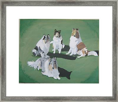 4 Collies Framed Print by Wendy Jackson