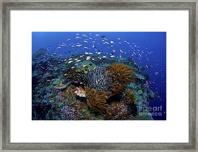 Colourful Reef Scene, Christmas Island Framed Print