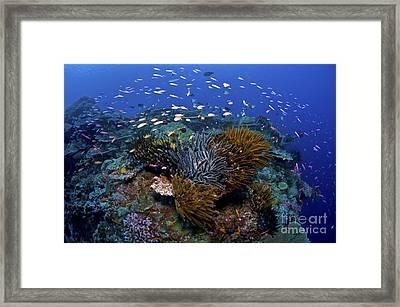 Colourful Reef Scene, Christmas Island Framed Print by Mathieu Meur