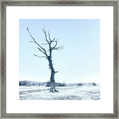 Dead Tree Framed Print by Joana Kruse