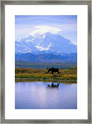Denali National Park Framed Print