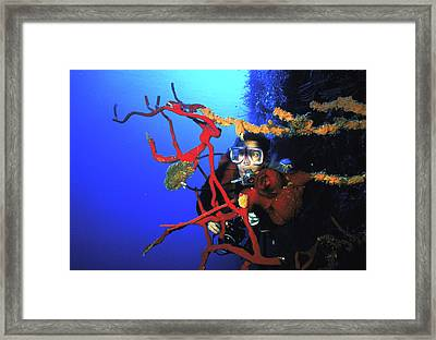 Diving The Wall At Little Cayman Framed Print by Carl Purcell