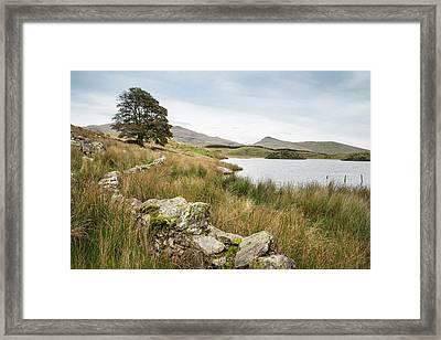 Evening Landscape Image Of Llyn Y Dywarchen Lake In Autumn In Sn Framed Print