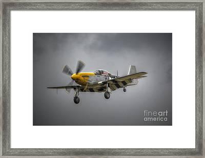 Ferocious Frankie Framed Print by Nigel Bangert