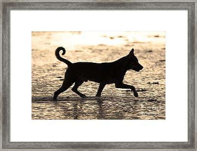 Fishing Dog Of Polynesia Framed Print by Jean-Louis Klein & Marie-Luce Hubert