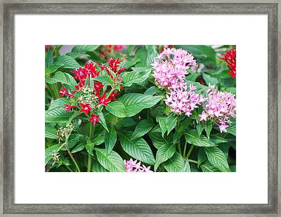 Framed Print featuring the photograph Flowers by Rob Hans