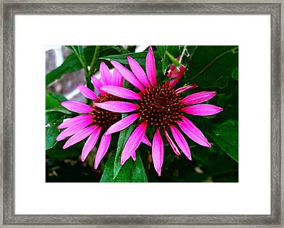 Flowers Framed Print by Robert Cunningham