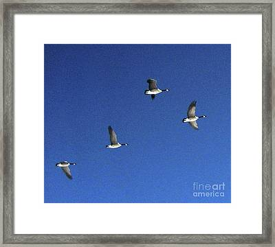 4 Geese In Flight Framed Print