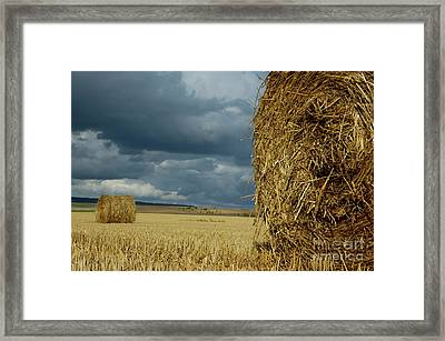 Hay Bales In Harvested Corn Field Framed Print by Sami Sarkis