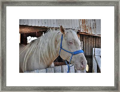 Horse Framed Print by Savannah Gibbs