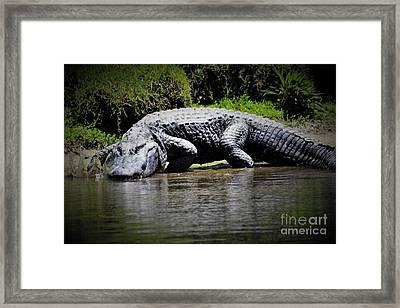 Huge Alligator Framed Print
