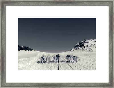 Huskies In Ilulissat, Greenland Framed Print by Joana Kruse