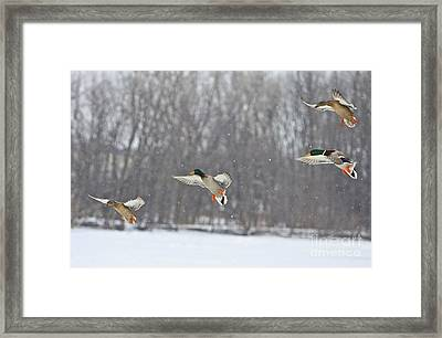 4 In A Row Framed Print by Robert Pearson