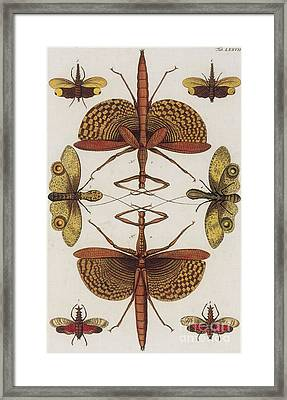 Insects, Sebas Thesaurus, 1734 Framed Print