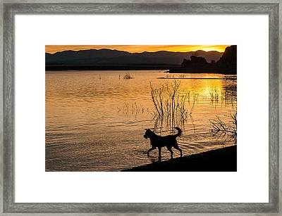 Four-legged Silhouette Framed Print by John Bartelt