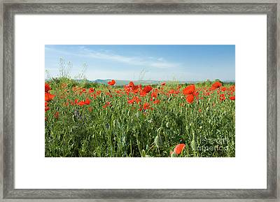 Meadow With Red Poppies Framed Print