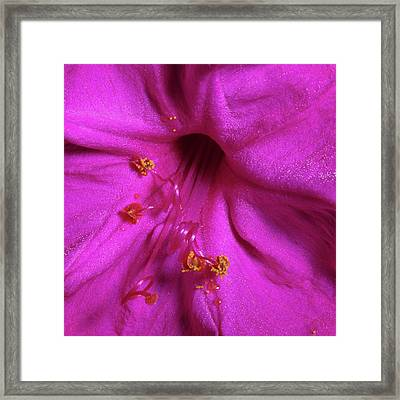 Framed Print featuring the photograph 4 O'clock Bloom by Richard Rizzo