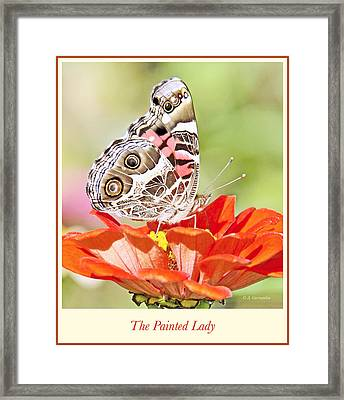 Painted Lady Butterfly On Zinnia Flower Framed Print