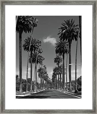 Palms Of Beverly Hills Framed Print