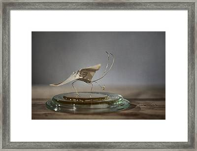 Paper Butterfly Framed Print by Nailia Schwarz