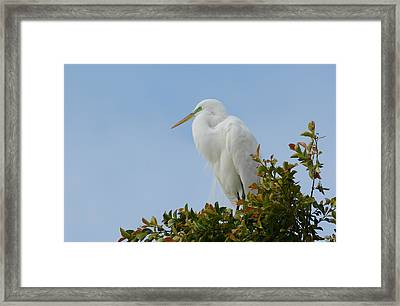 Framed Print featuring the photograph Poised by Fraida Gutovich