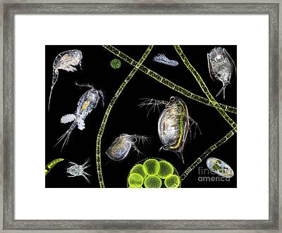 Pond Life Framed Print by Laguna Design