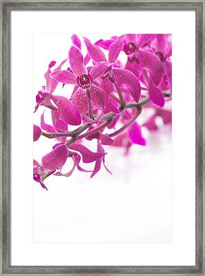 Purple Orchid Bunch Framed Print