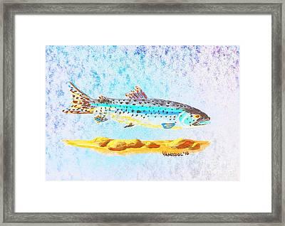 Rainbow Trout Framed Print by Scott D Van Osdol