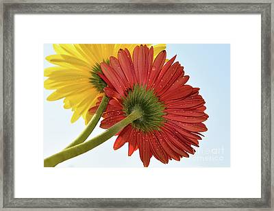 Red And Yellow Framed Print by Elvira Ladocki