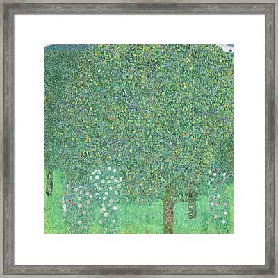Rosebushes Under The Trees Framed Print