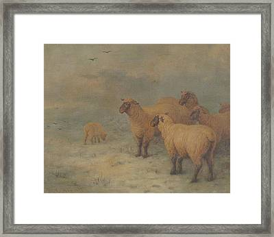 Sheep On Moorland Framed Print by Henry Charles