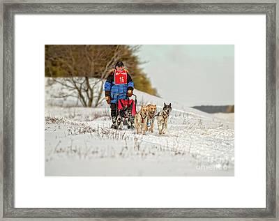 Sled Dog Races Framed Print
