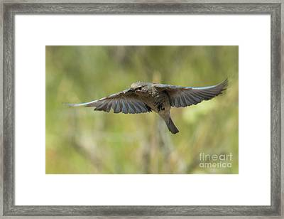 Spread Your Wings Framed Print by Mike Dawson
