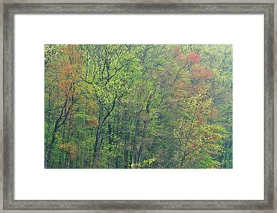 Spring Forest In Bloom Framed Print by Dean Pennala