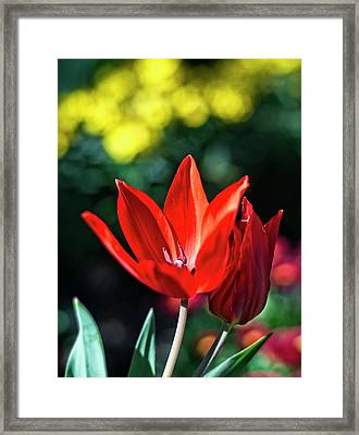 Spring Garden Framed Print by Miguel Winterpacht