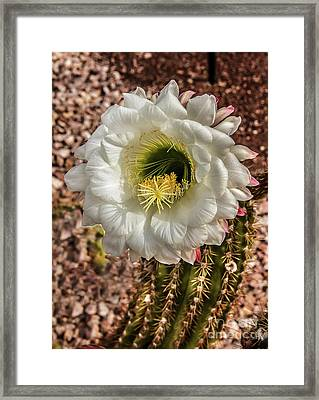 The Argentine Giant Framed Print by Robert Bales