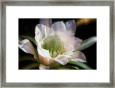 Framed Print featuring the photograph The Beauty Of White  by Saija Lehtonen