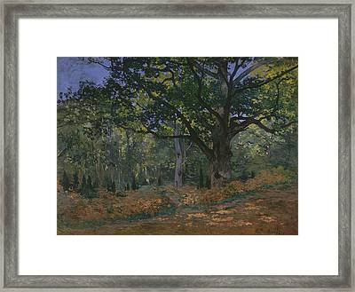 The Bodmer Oak, Fontainebleau Forest Framed Print by Claude Monet