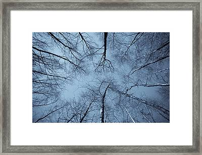 Trees In Epping Forest Framed Print